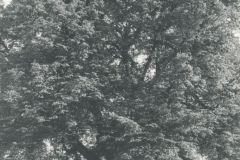 heimatverein-eystrup-108
